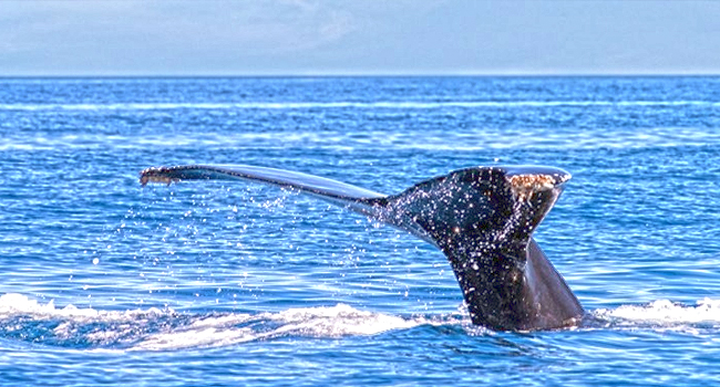 Fishing La Paz Charters Mexico, Whale Watching